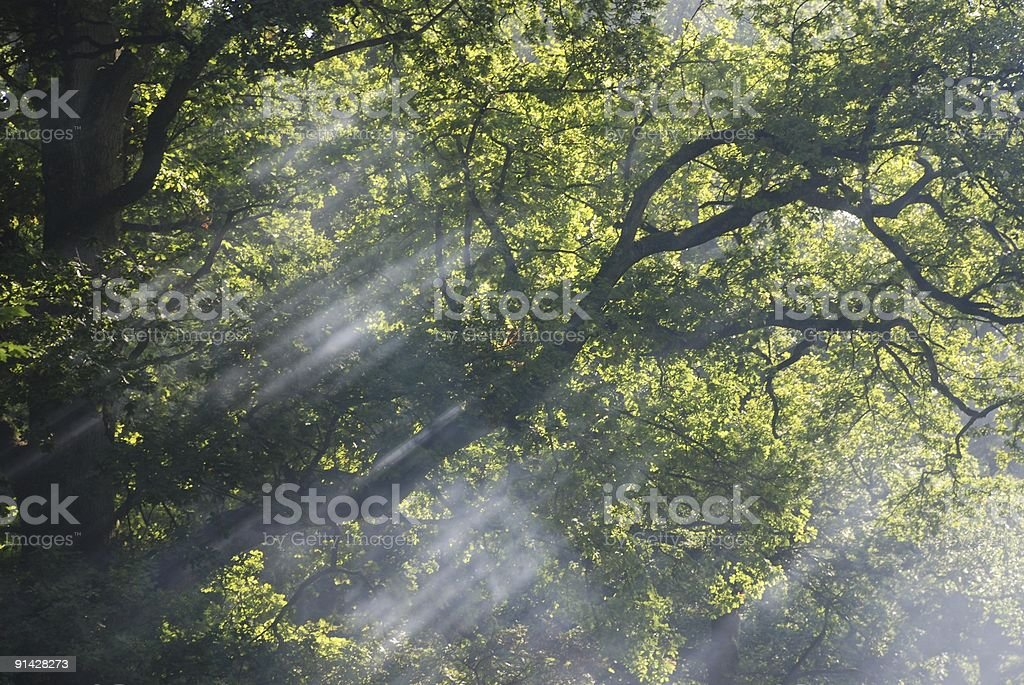 Dappled Sunlight royalty-free stock photo