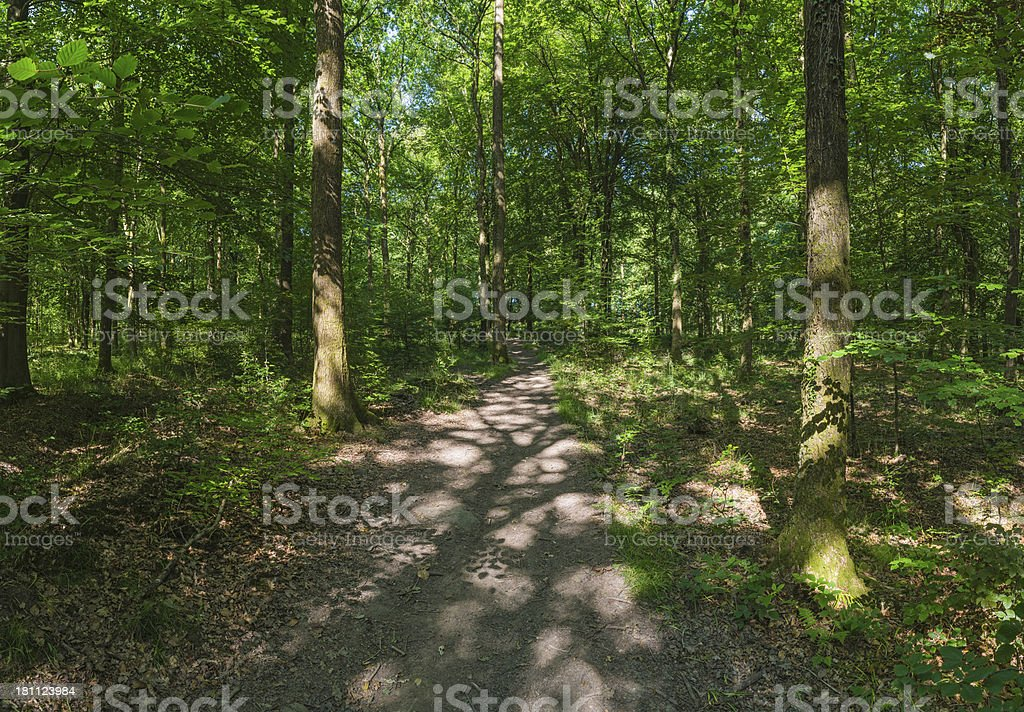 Dappled sunlight under idyllic green canopy of summer forest royalty-free stock photo