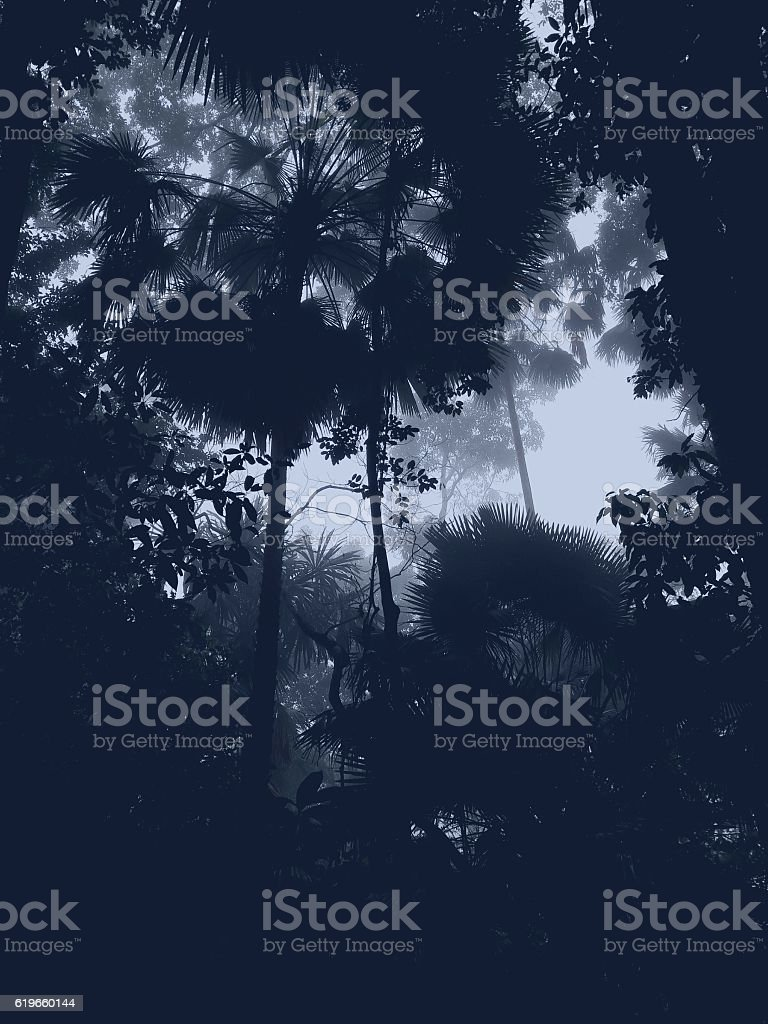 Dark amazon jungle forest stock photo