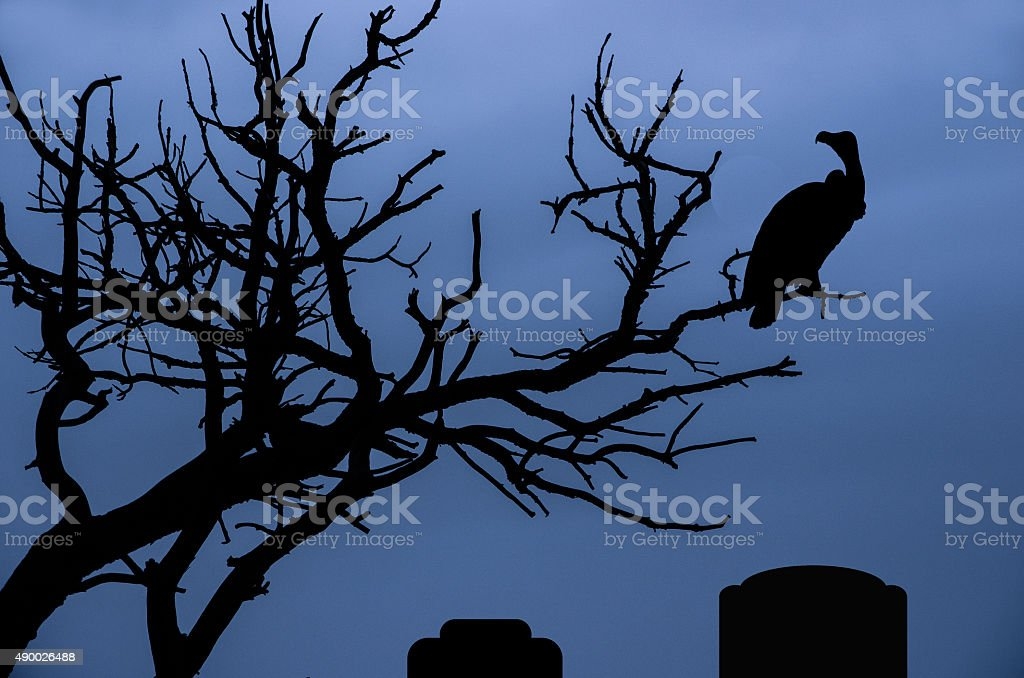 Dark and spooky tree with a vulture silhouette stock photo