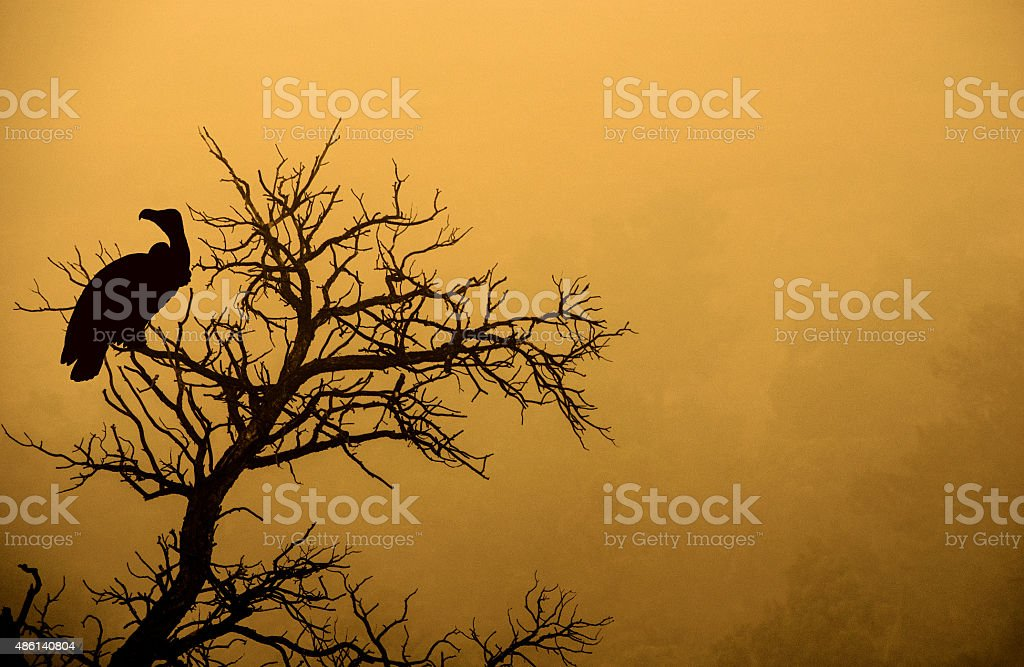 Dark and spooky tree with an vulture silhouette stock photo