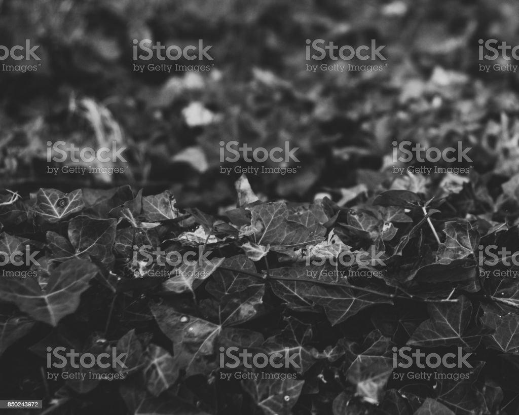 Dark Autumn stock photo