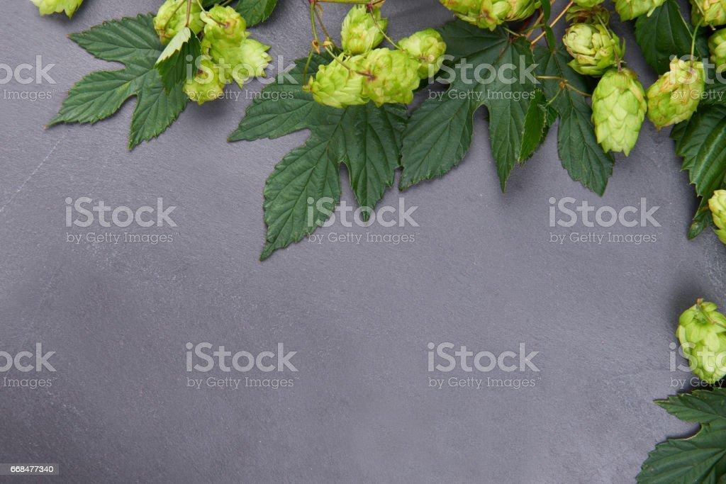 Dark background with fresh green hop frame stock photo