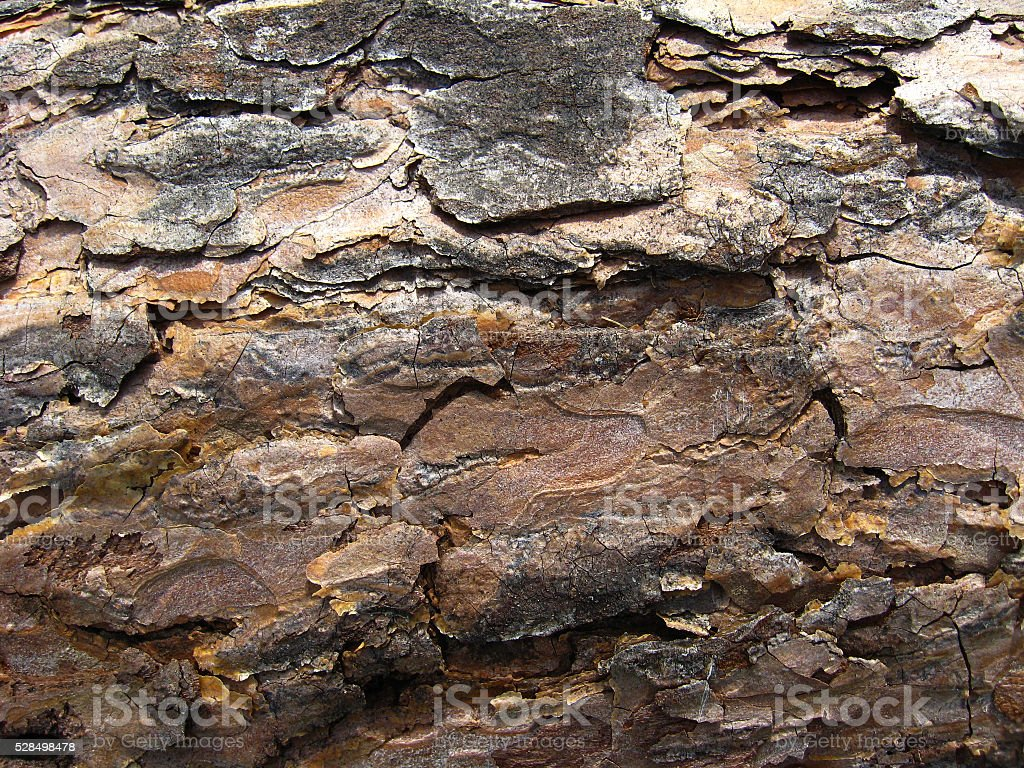 Dark bark of a pine stock photo