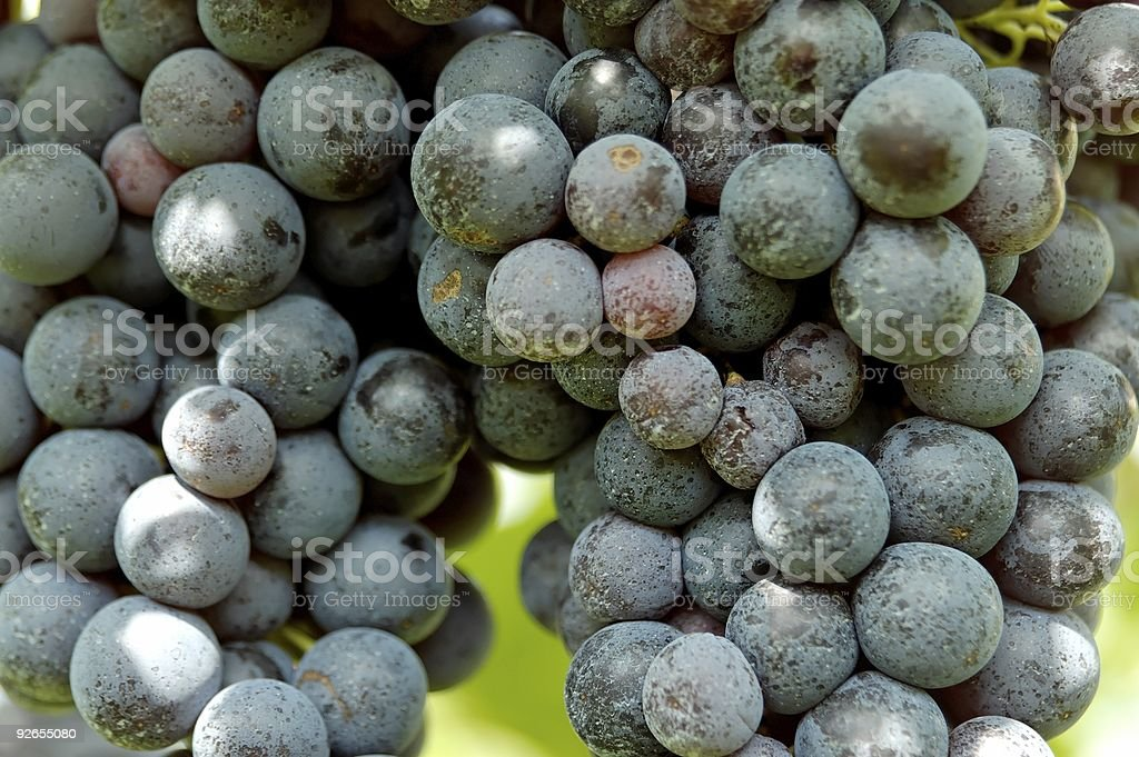dark blue grapes waiting for vintage royalty-free stock photo