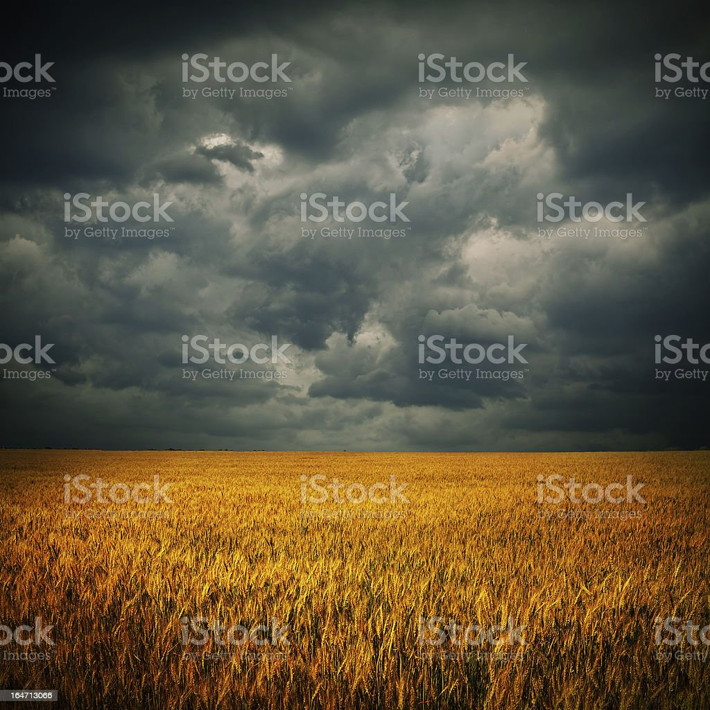 Dark clouds over wheat field stock photo