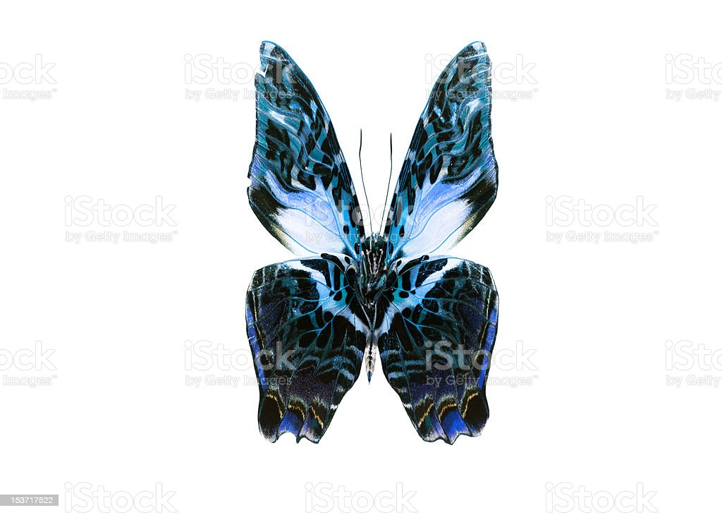 Dark Color Butterfly. Isolated on white background royalty-free stock photo