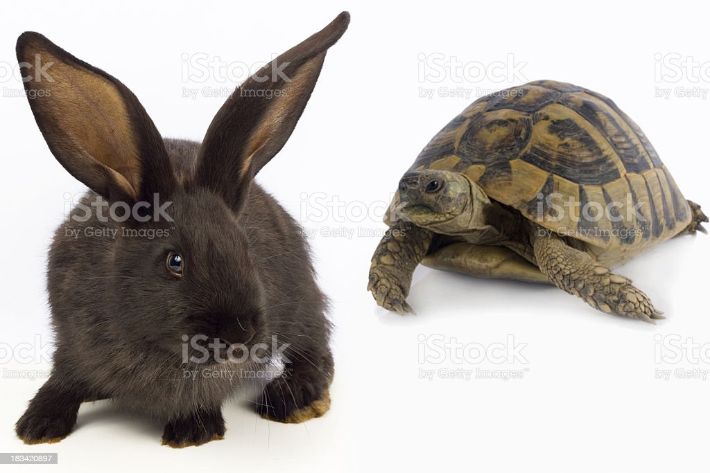 Dark colored rabbit with a turtle in the background royalty-free stock photo