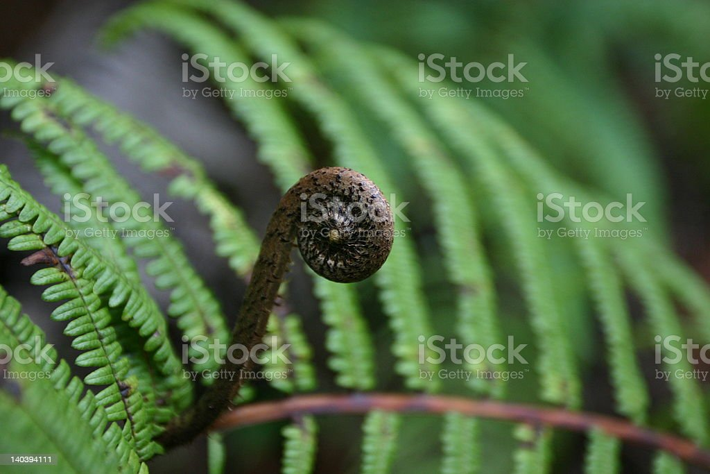 Dark Curled Fern Frond stock photo