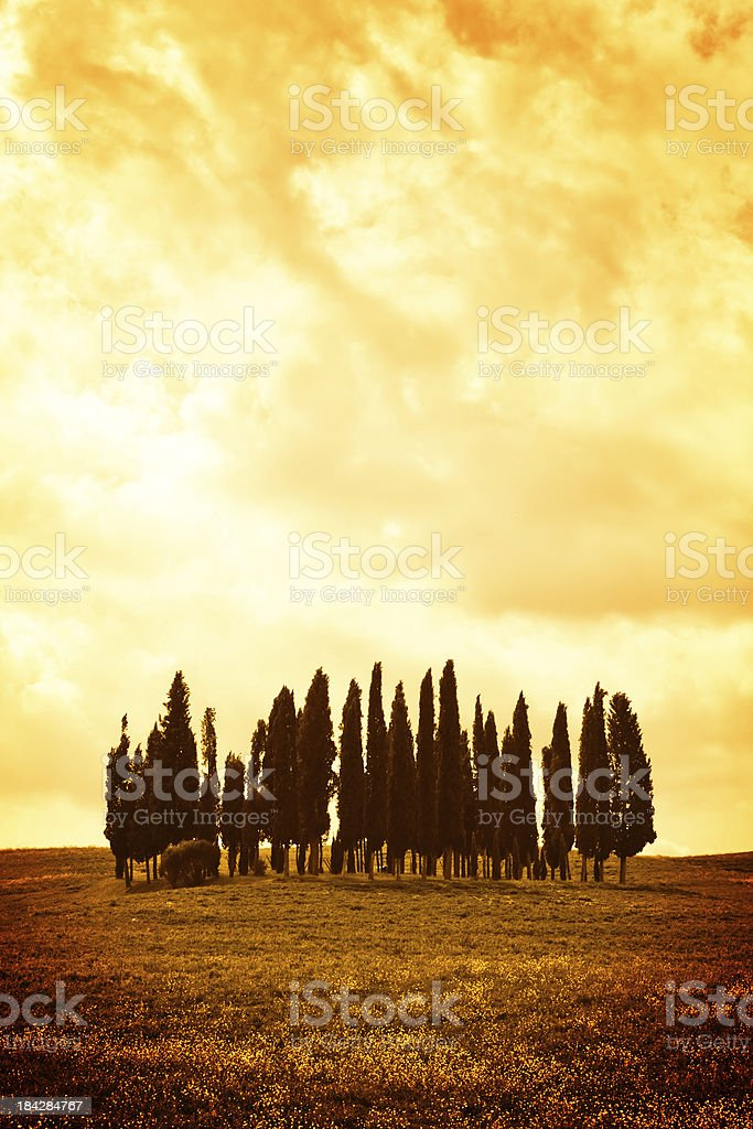 Dark Cypresses in Orange Storm, Val d'Orcia royalty-free stock photo