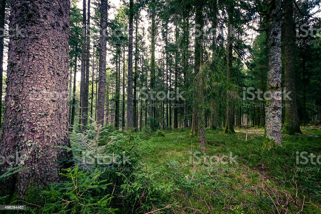 Dark Deep Black Forest, Germany stock photo