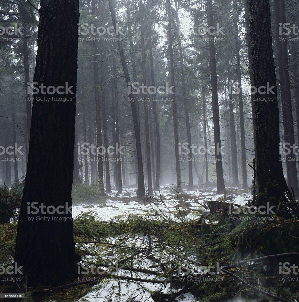 XXXL dark deep forest stock photo