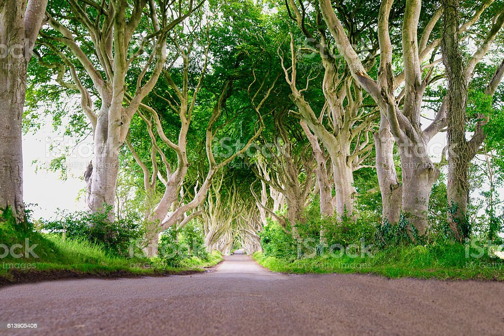Dark edge forest in Ireland stock photo