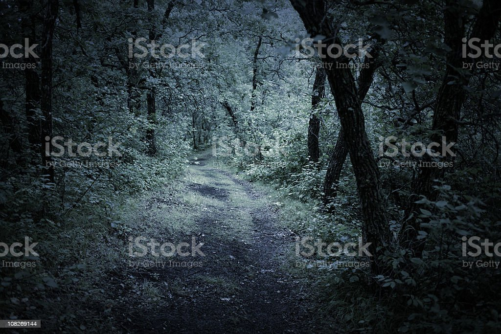Dark Eerie  forest royalty-free stock photo