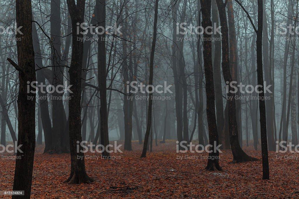 Dark foggy forest stock photo