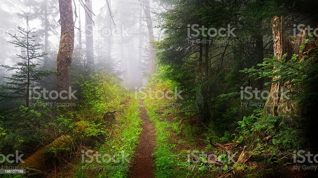 Dark Foggy Trail and Woods stock photo