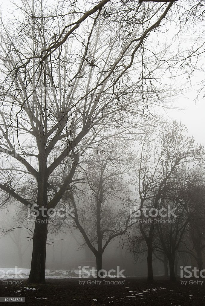 Dark forest and the fog royalty-free stock photo