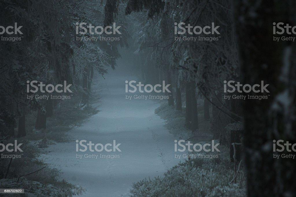 dark forest stock photo
