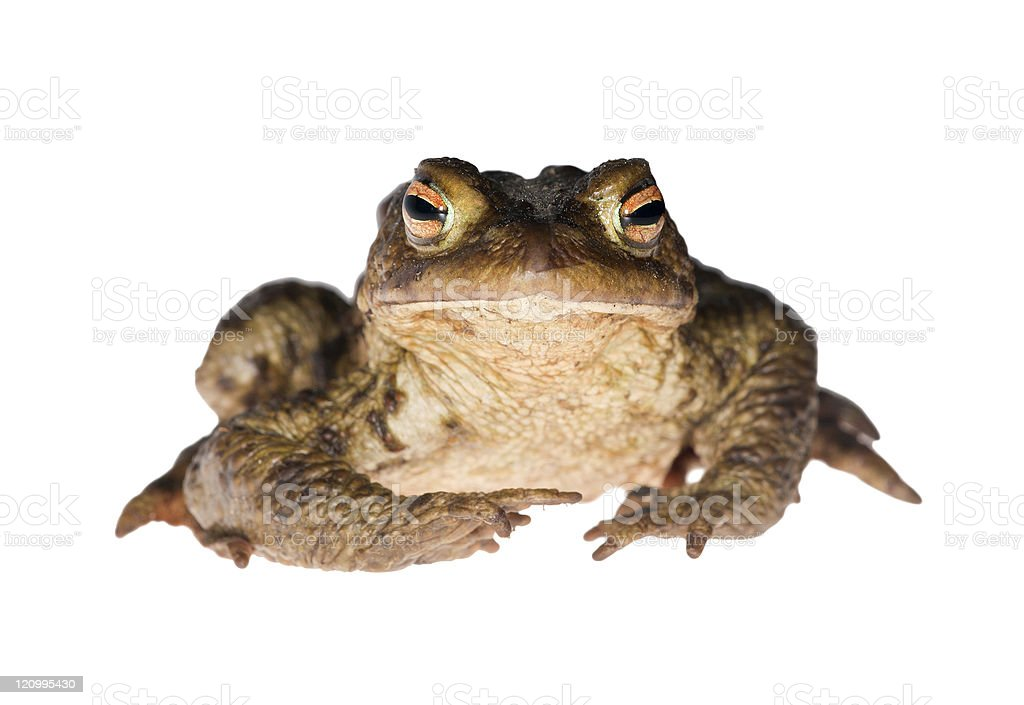 dark frog gaze stock photo