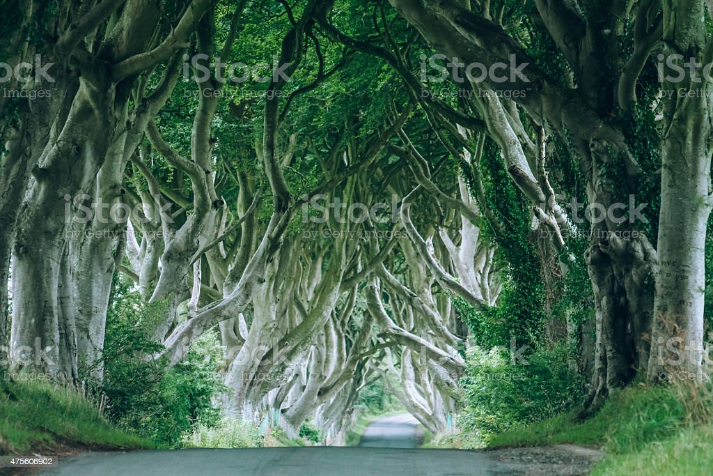 Dark Hedges, County Antrim, Northern Ireland stock photo