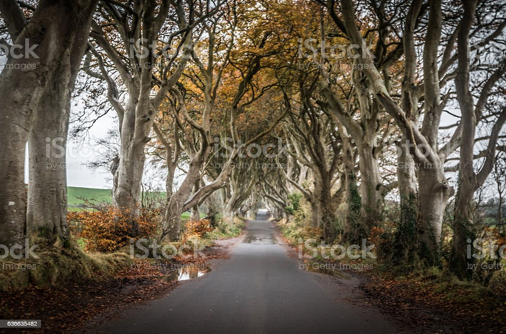 Dark Hedges in Northern Ireland stock photo