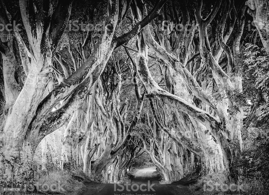 Dark Hedges, Ireland stock photo