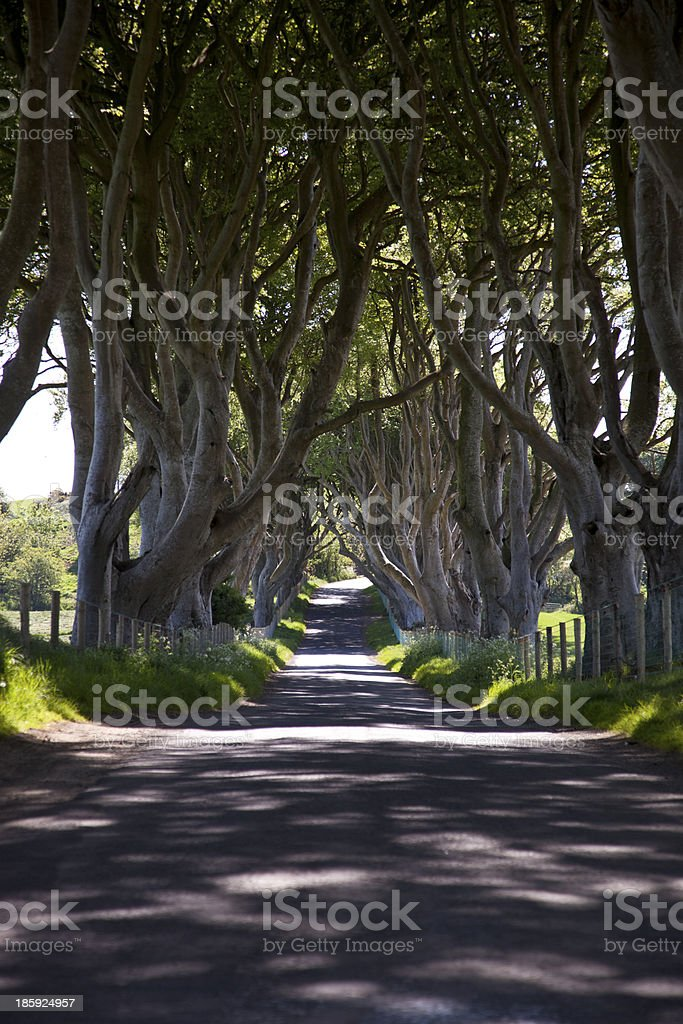 Dark Hedges royalty-free stock photo