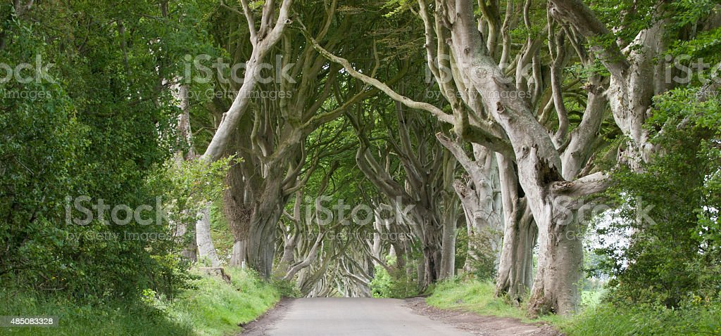Dark Hedges stock photo