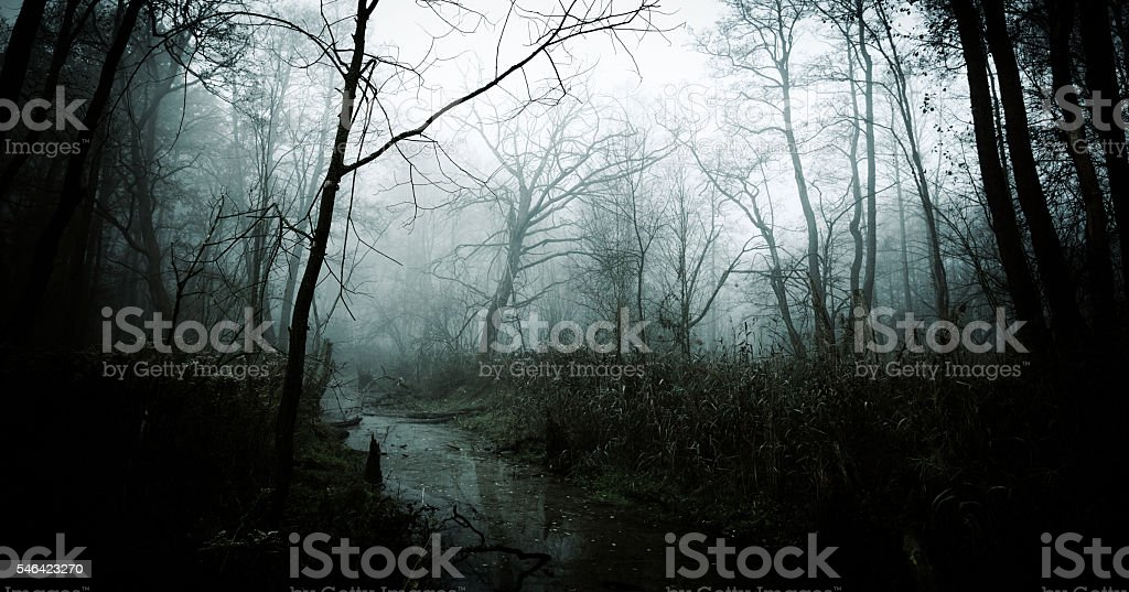 Dark Misty Forest stock photo