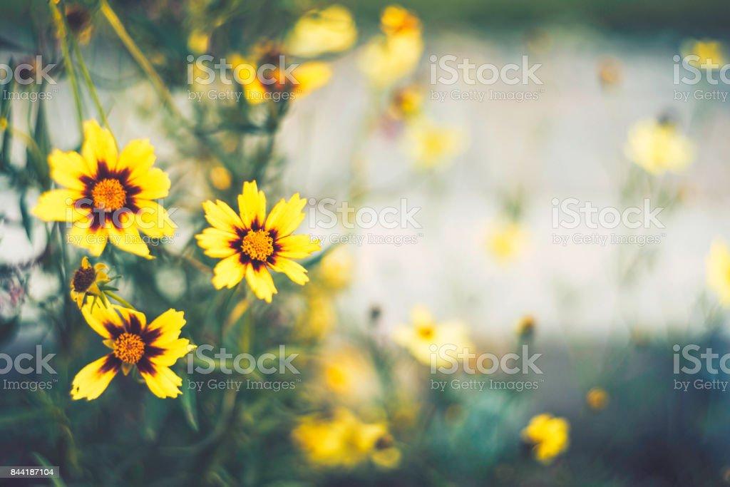 Dark nature. Beautiful wildflowers at dusk. Flower Immersion stock photo