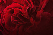 dark red petal rose on mulberry paper texture background