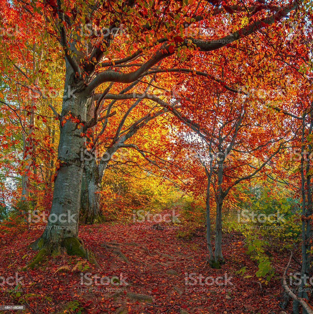 Dark road in the autumn mountains wood. stock photo