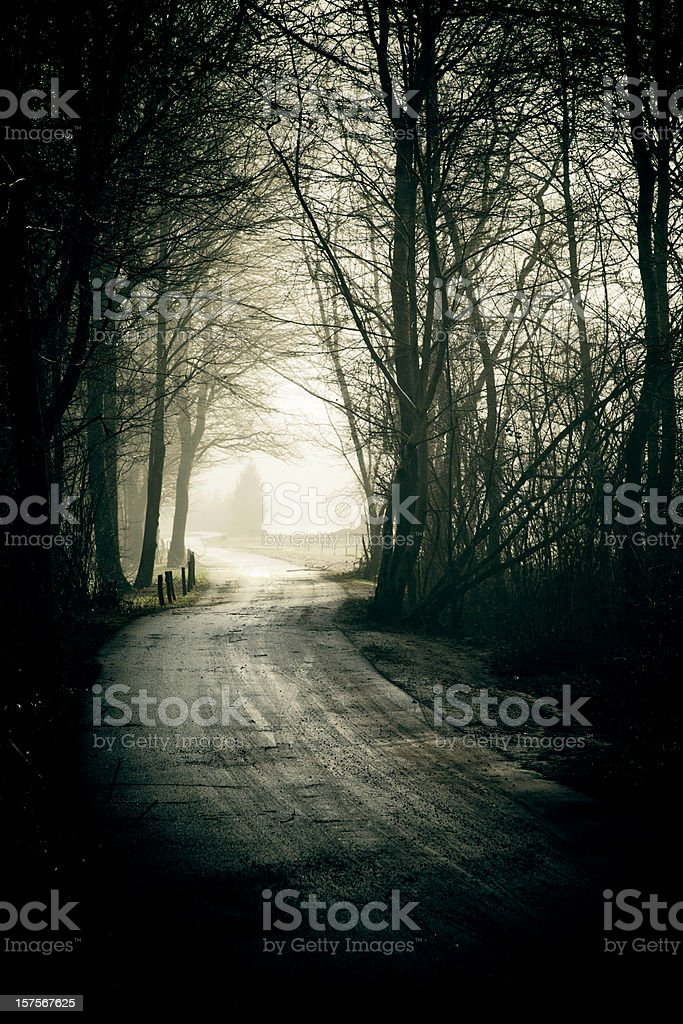 Dark road in the woods royalty-free stock photo
