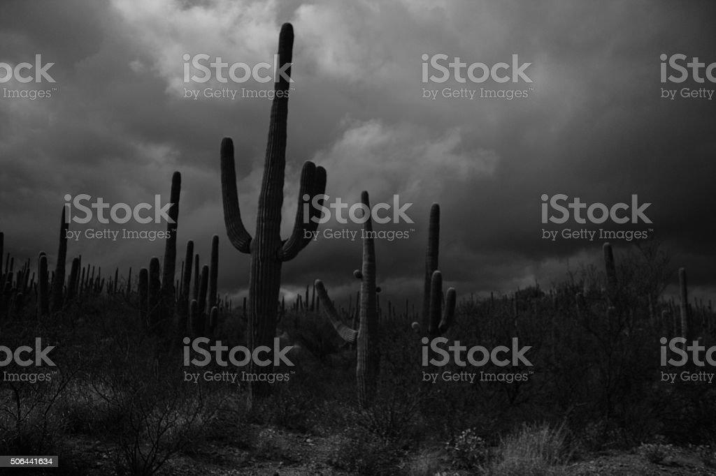 Dark saguaro stock photo