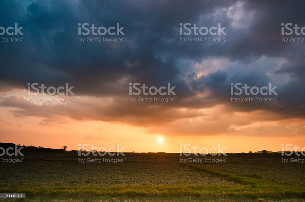Dark storm clouds over rice field at sunset stock photo