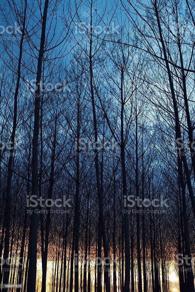 Dark sunset royalty-free stock photo