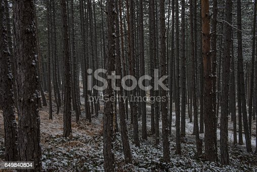 dark winter forest stock photo 649840804 istock