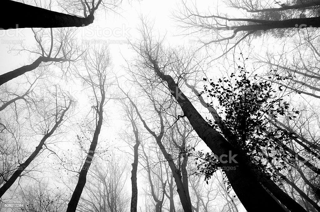 Dark wintere scene: bare tree canopy stock photo