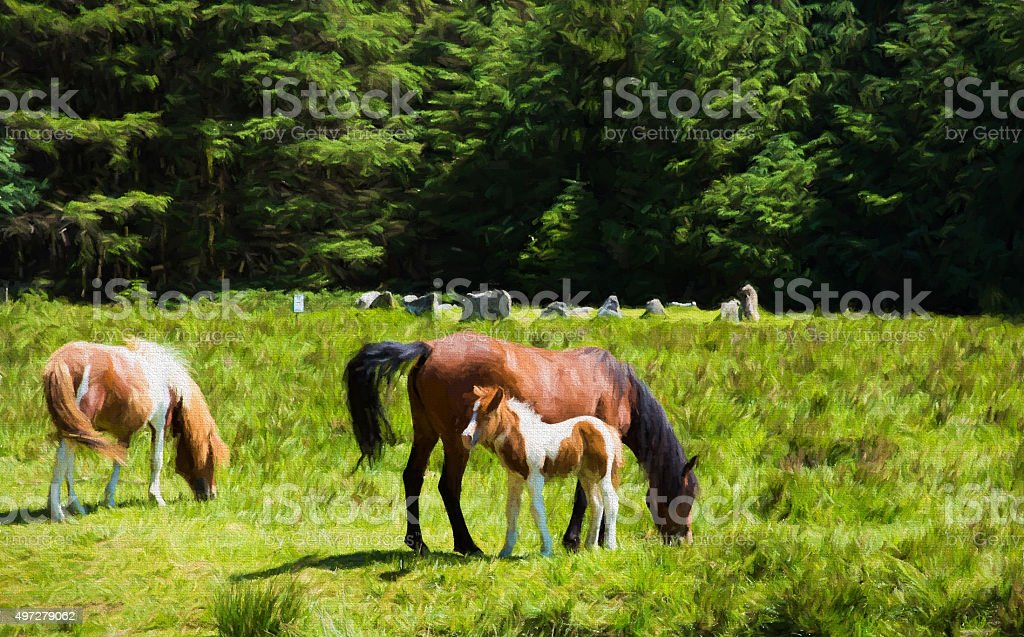 Darmoor pony foal and mother Soussons Cairn Circle Dartmoor Devon stock photo