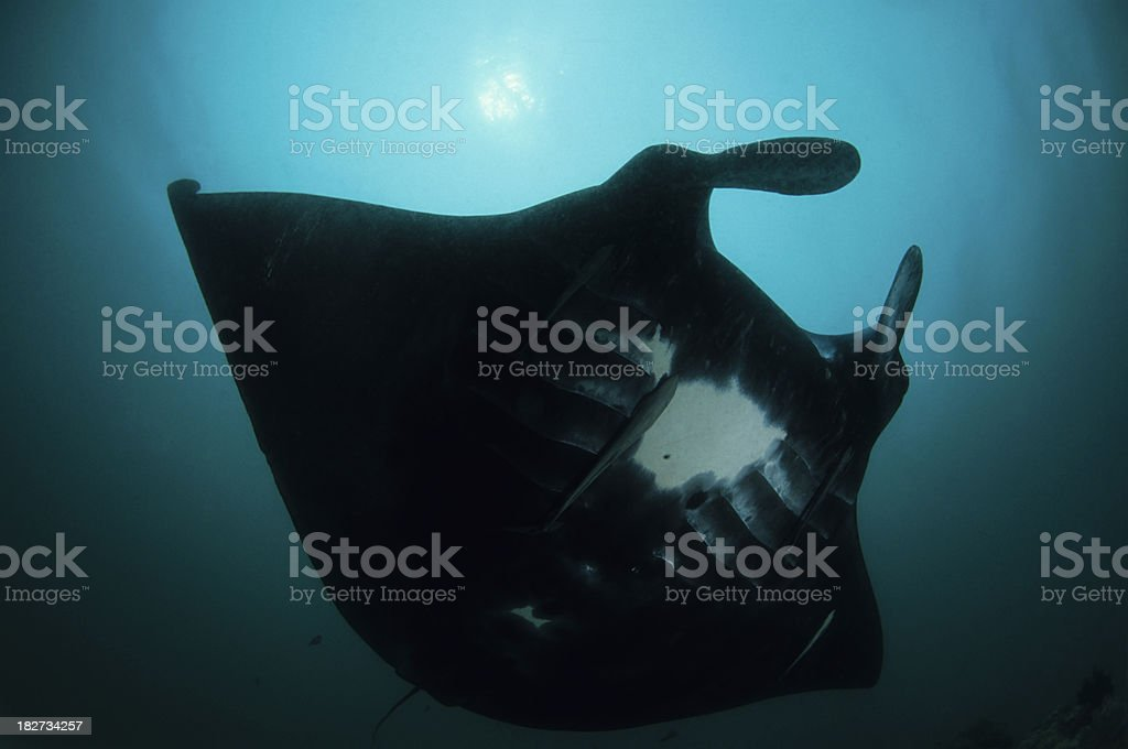 Darth Manta stock photo