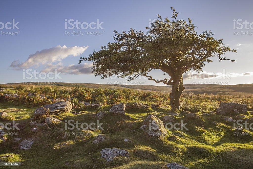 Dartmoor at sunset stock photo