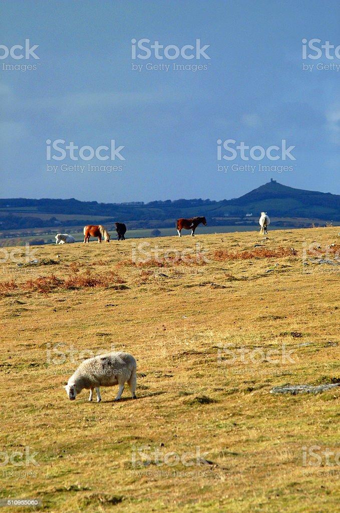 Dartmoor National Park, UK stock photo
