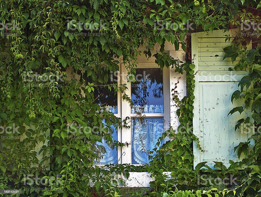 Das Grüne Fenster stock photo