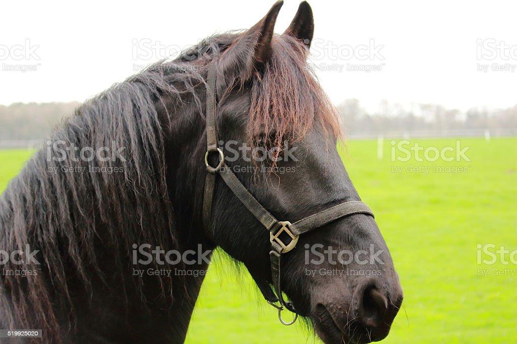 Das Pferd stock photo