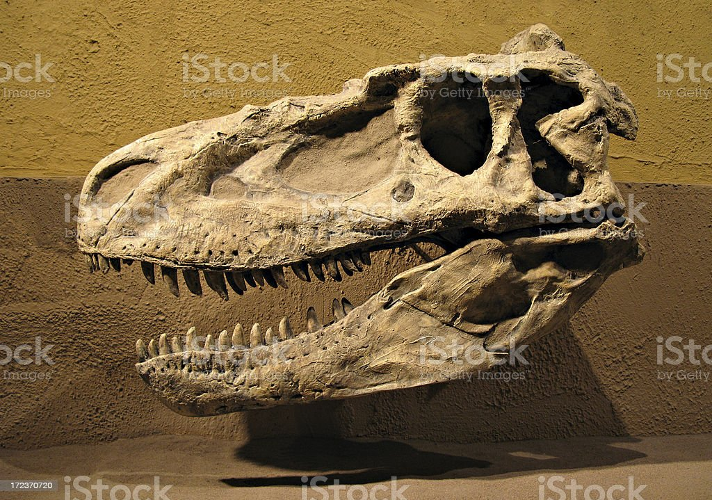 Daspletosaurus royalty-free stock photo
