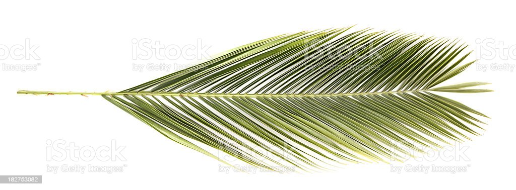 Date Palm Branch on White Background stock photo