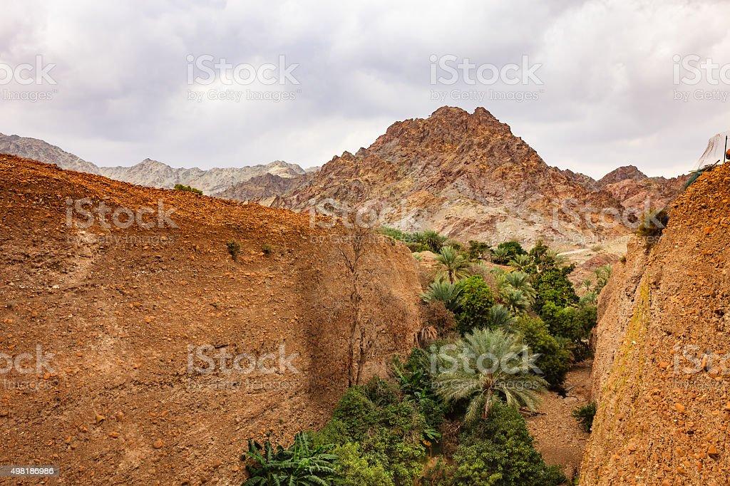 UAE: date palms and fruit trees in Arabian desert wadi. stock photo