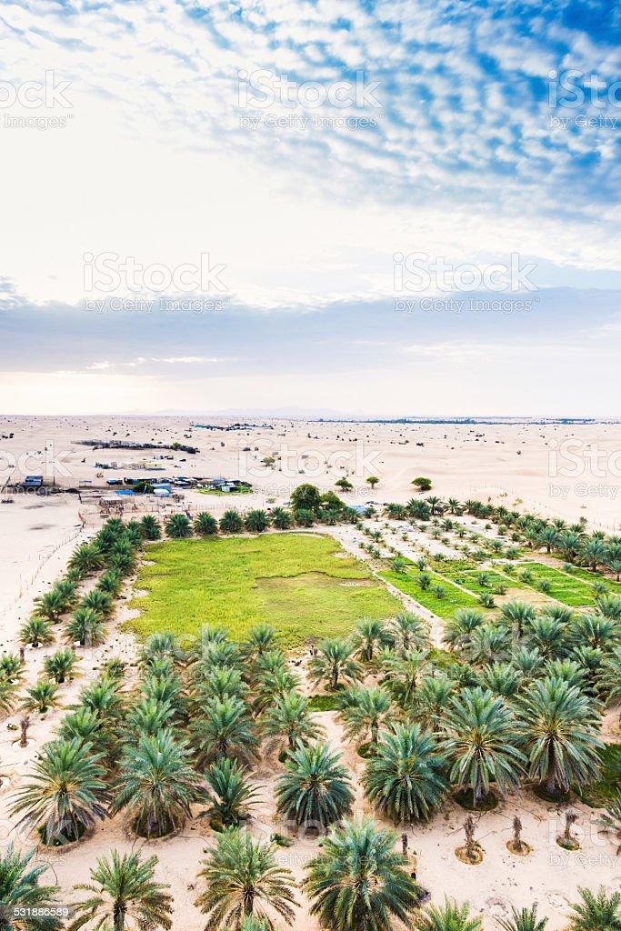 date plantation in the desert stock photo