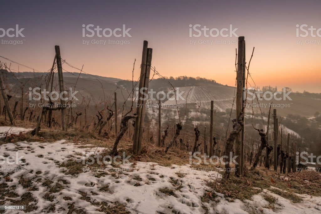 Dawn and blue hour in a vineyard with snow stock photo