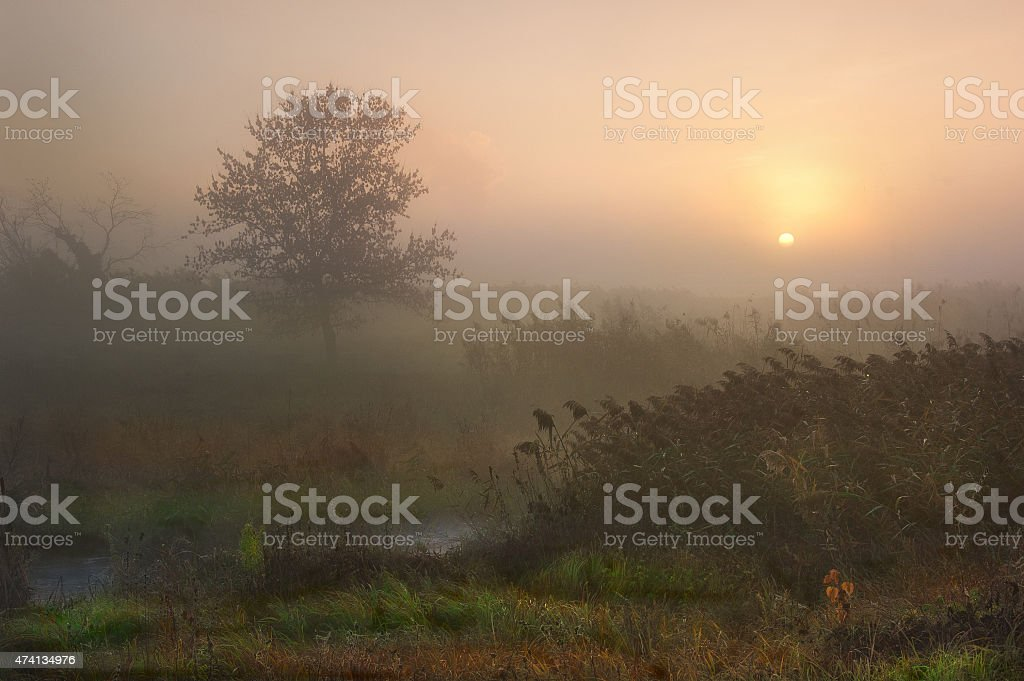Dawn and mist near the river stock photo